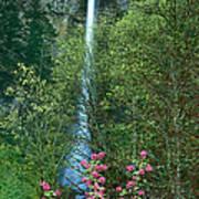 Flowering Tree Below Multnomah Falls Columbia River Gorge Nsa Oregon Poster