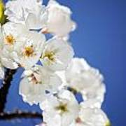 Flowering Trees Poster