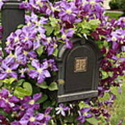 Flowering Vine  Poster