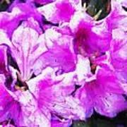 Flowers 2078 Oil Hp Poster