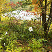 Flowers Along The River In Fall Poster