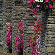 Flowers At Liscannor Rock Shop Poster
