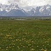 Flowers Before The Tetons Poster