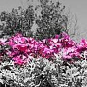 Flowers Dallas Arboretum V17 Poster