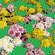 Flowers Everywhere Poster