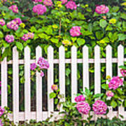 Flowers - Floral - White Picket Fence Poster