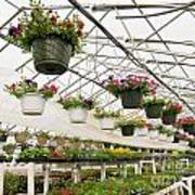 Flowers Growing In Foil Hothouse Of Garden Center Poster