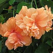 Flowers In Peach Poster by Good Taste Art