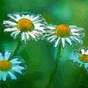 Flowers In Sunlight Poster