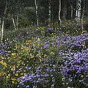 Flowers In The Aspen Forest Poster