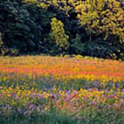 Flowers In The Meadow Poster