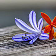Flowers Of Blue And Orange Poster