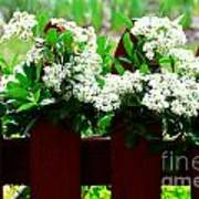 Flowers On Fence Poster