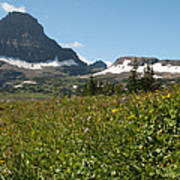 Flowers On Logan Pass Poster