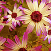 Flowers Pink And White Poster