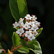 Flowers-tiny White Poster