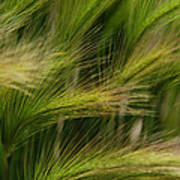 Flowing Grasses Poster