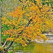 Flowing River Leaning Tree Poster