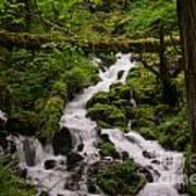 Flowing Stream In Spring Poster