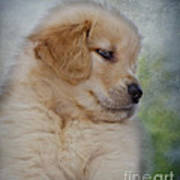 Fluffy Golden Puppy Poster by Susan Candelario