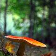 Fly Agaric Poster