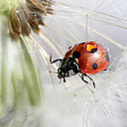 Fly Ladybug. Fly Poster