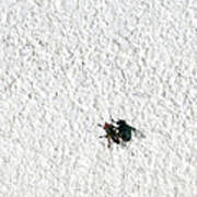 Fly On A Wall Poster