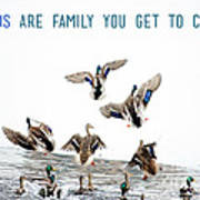 Flying Ducks And A Friends Quote Poster
