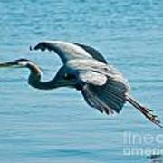 Flying Heron Poster