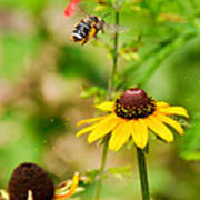 Flying Pollen Poster