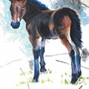 Foal Painting Poster