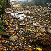 Fog And Fall Color Williams River Poster