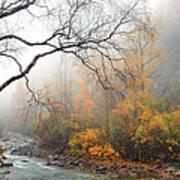 Foggy Autumn Poster