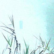 Foggy  Marsh Mornng Poster