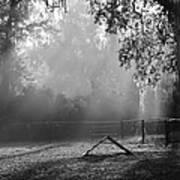 Foggy Morn At Dog Park Poster