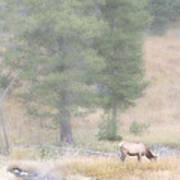 Foggy Morning Elk Poster