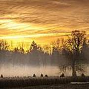 Foggy Sunrise Poster