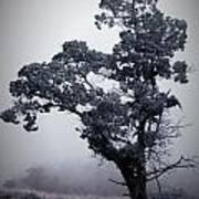 Foggy Winter I Poster