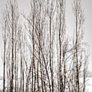 Foggy Winter Tree Fence 13271 Poster