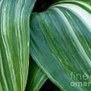 Foliage Folds Poster