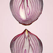 Food - Vegetable - Cross Section Of A Red Onion Poster