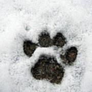 Footprint Series. Cat Poster