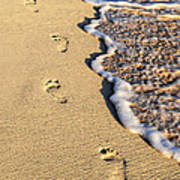 Footprints On Beach Poster