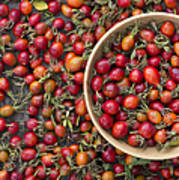 Foraged Rose Hips Poster
