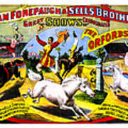 Forepaugh And Sells The Orfords Poster