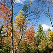 Forest Edge Autumn Pocono Mountains Pennsylvania Poster