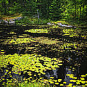 Forest Lake With Lily Pads Poster