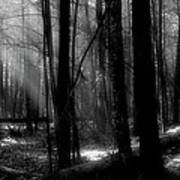 Forest Light In Black And White Poster