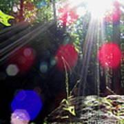 Forest Lightscape Poster