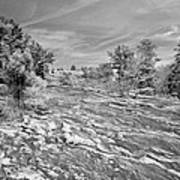 Forest Slope And Sky In Black And White Poster
